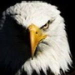 eko28 kullanıcısının profil fotoğrafı